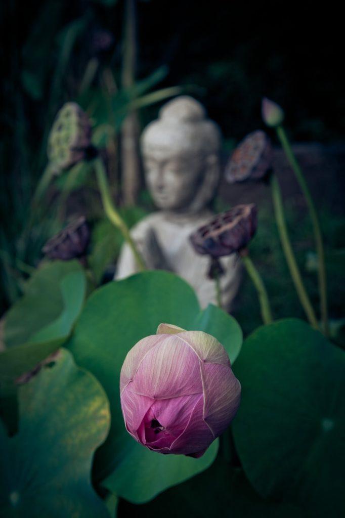 flor y Budha