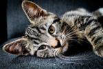 Receta para el Día Mundial de los Animales