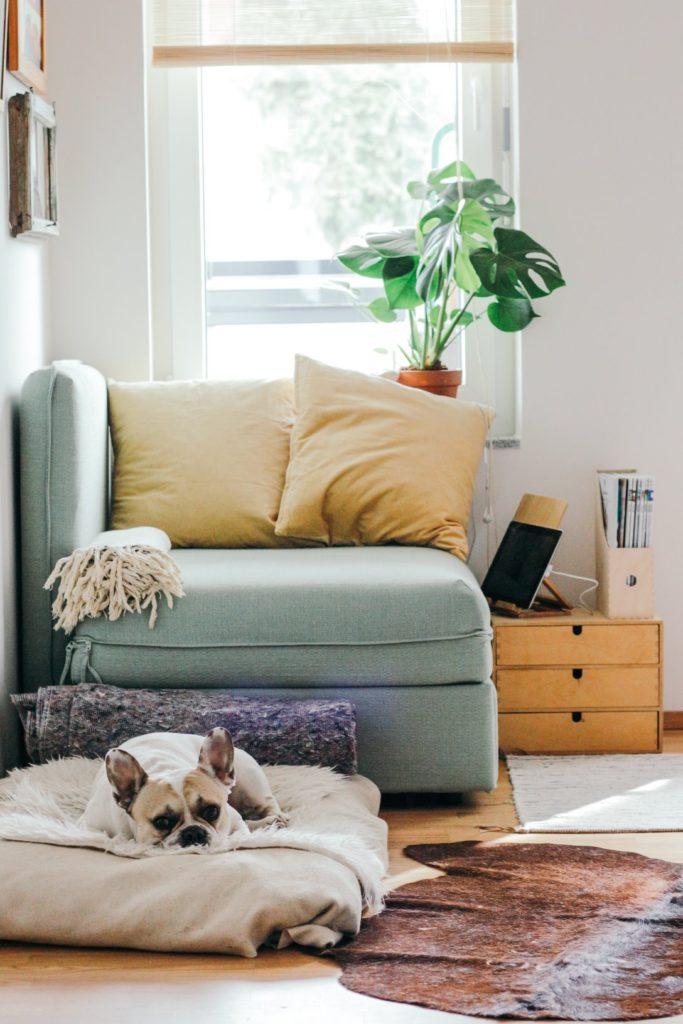 Sala de estar con perro y luz es parte de la fórmula de la felicidad