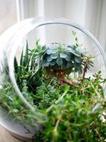 5 ambientadores naturales para el hogar
