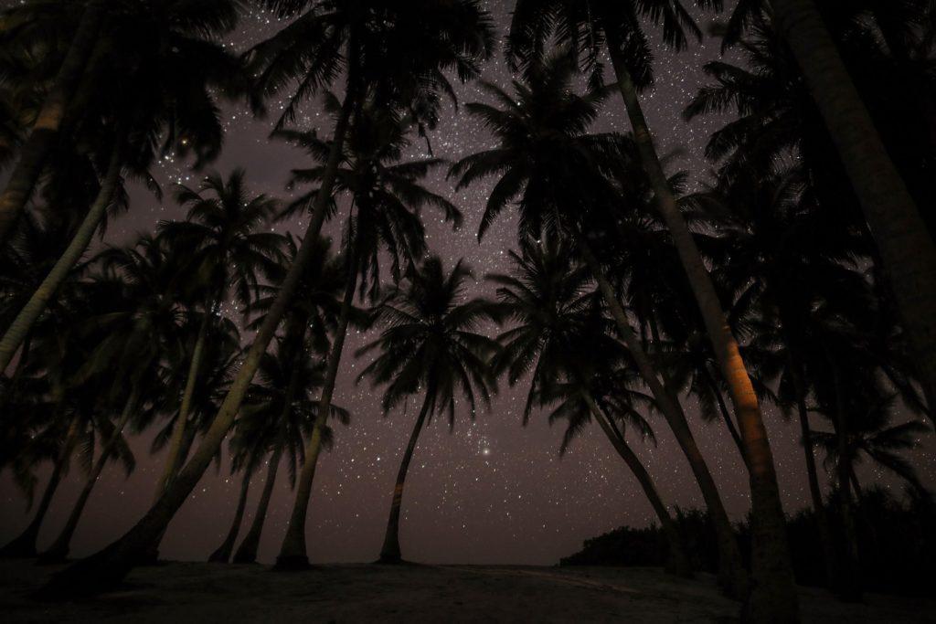 cielo estrellado bajo palmeras