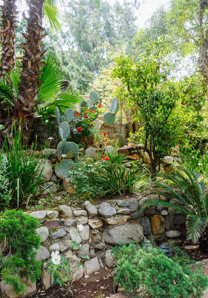 vegetación de un jardín