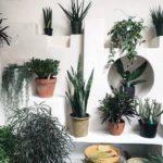 5 plantas de interior para torpes