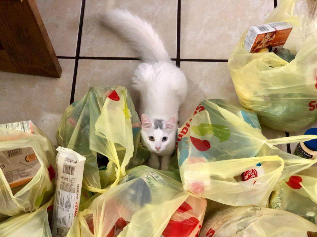 gato rodeado de bolsa de plástico