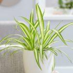 3 plantas para limpiar el aire – segunda parte