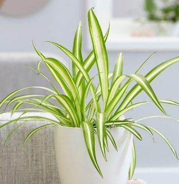 una de las plantas para limpiar el aire