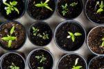 Qué plantar en tu huerto urbano