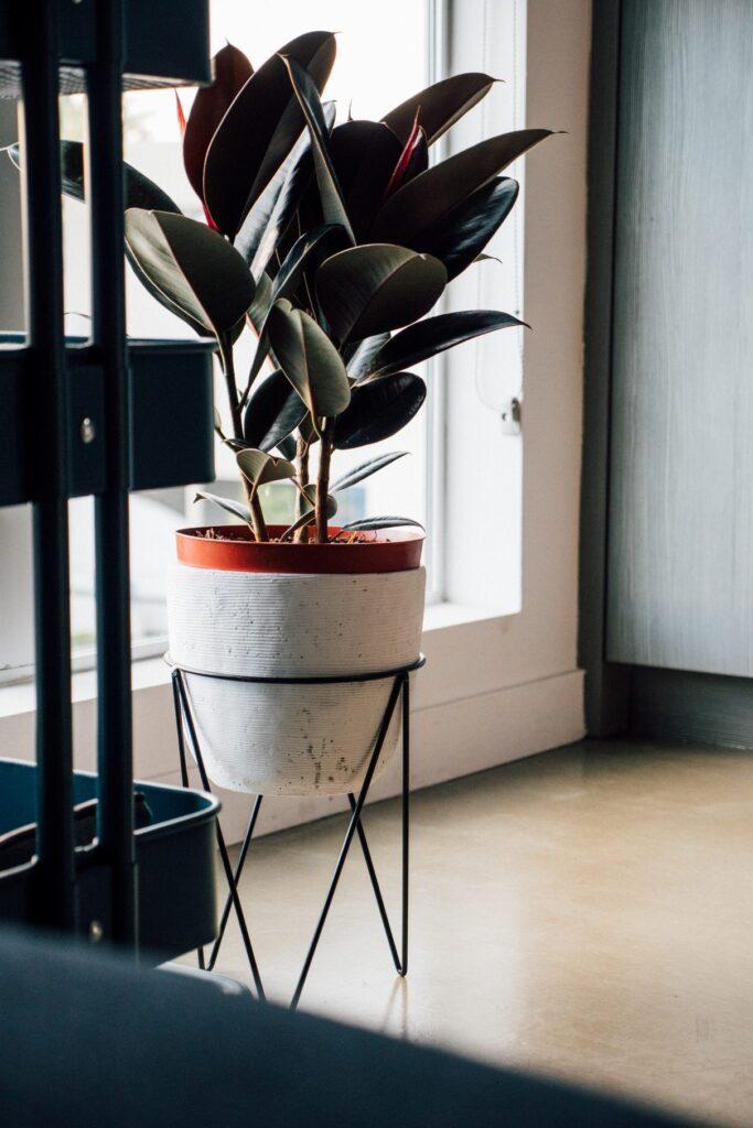 una de las plantas que limpian el aire